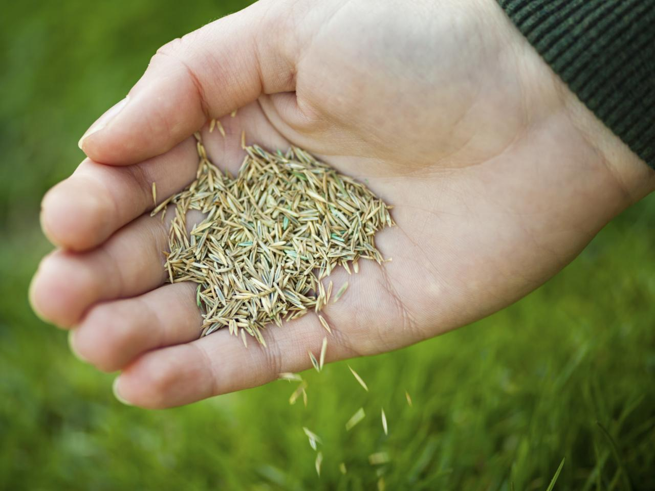 Turf Grass for Home Lawns