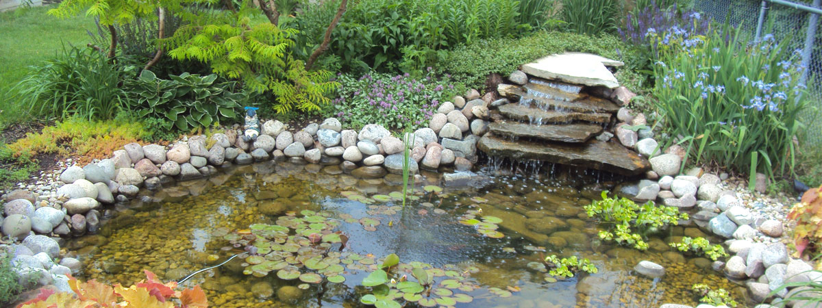 Water Garden Protect Your Pond From Blue Herons