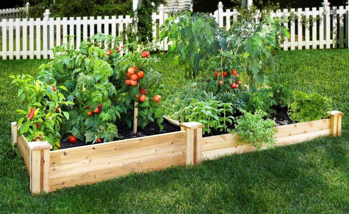 Raised Bed Gardening Starter Guide on backyard vegetable garden design, raised planter beds design, raised vegetable garden design,